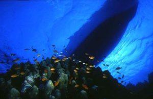 Introduzione alle immersioni nelle acque del Parco Marino di Punta Campanella