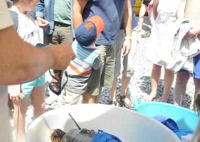 Liberazione tartarughe 4 giugno 2016