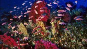 Foto subacquea del Parco Marino