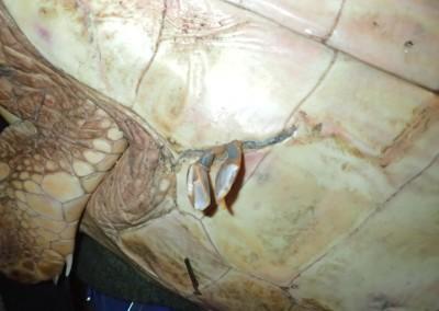 ferite-tartaruga-febbraio