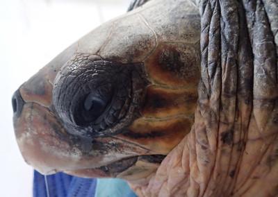 tartaruga-febbraio-2