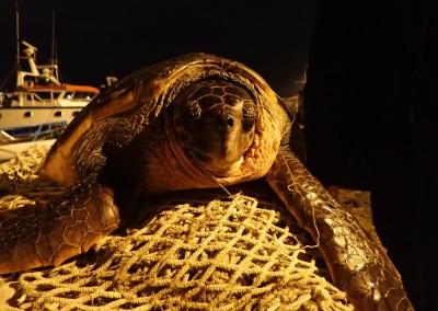 tartaruga-febbraio