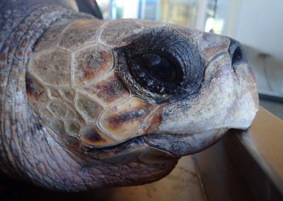 tartaruga-febbraio-7