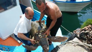 tartaruga-recuperata-aprile