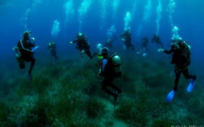 Corso teorico-pratico di Biologia Marina 2020