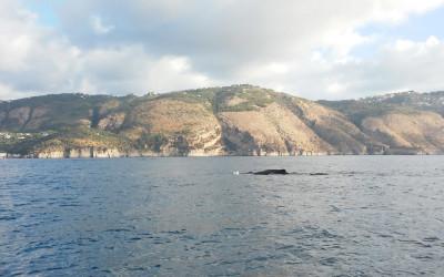 Punta Campanella, avvistato un capodoglio al largo di Nerano