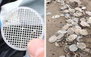 Emergenza dischetti plastica in mare