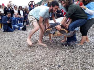Tartarughe liberate nel parco marino