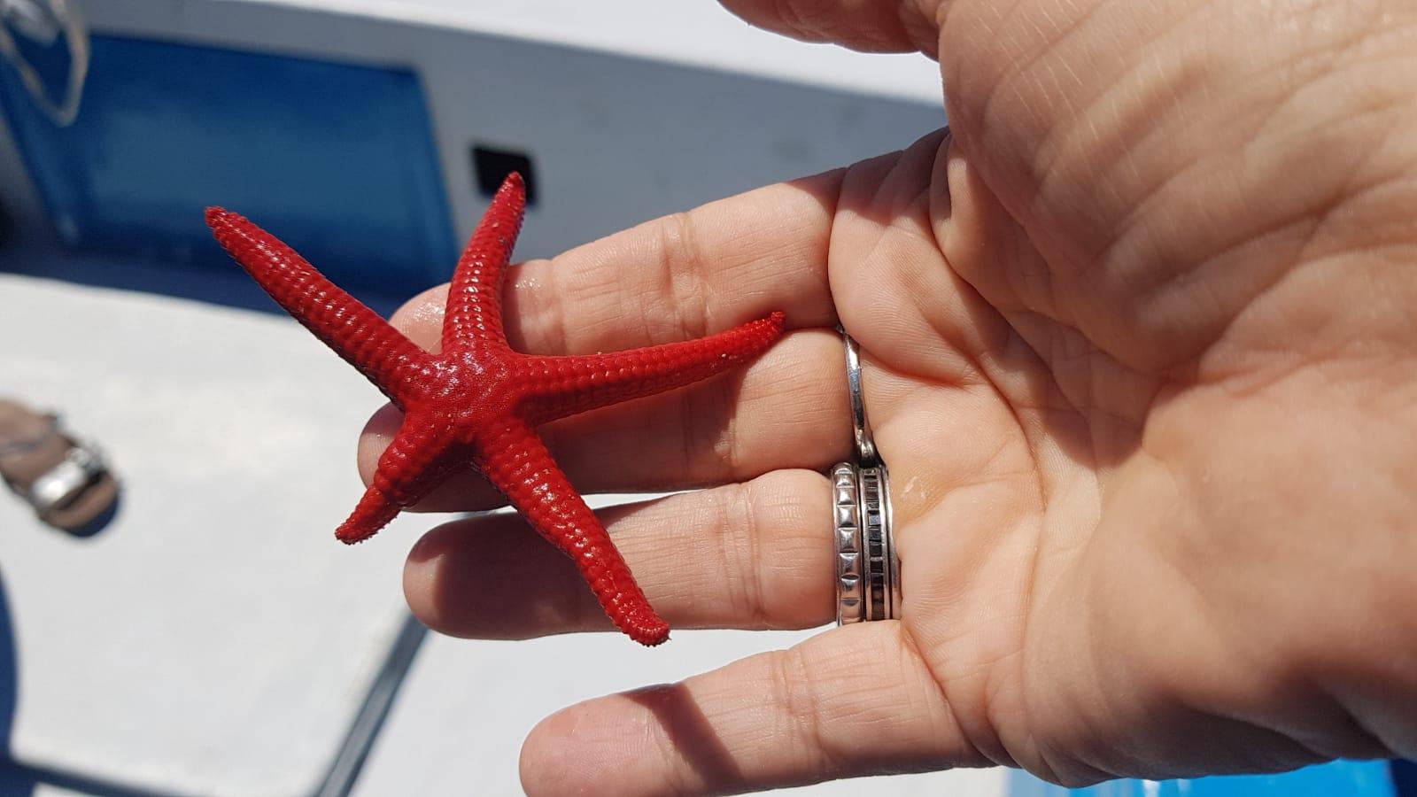 Stelle marine e granchi liberati dalle reti, Punta Campanella nel Cilento per la bonifica dei fondali marini