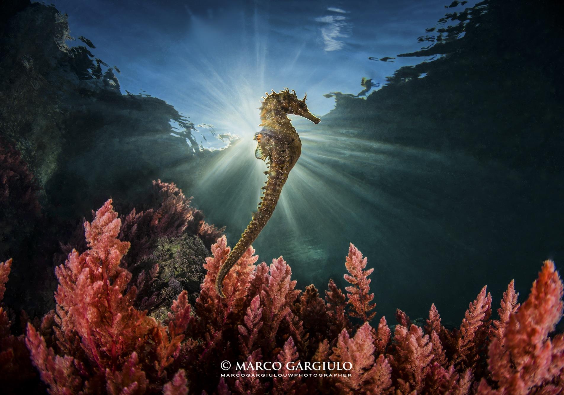 """La foto di Marco Gargiulo nelle acque di Punta Campanella che ha vinto """"Obiettivo Mare"""" 2021"""
